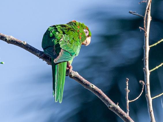 Galería Birding Cuba 565x424