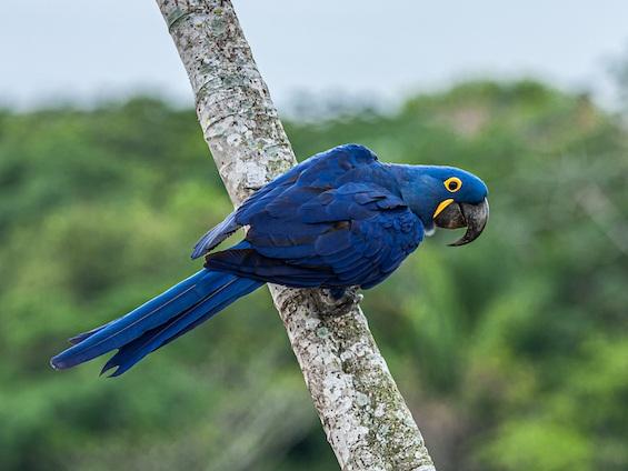Galería Birds and WL Pantanal & Cerrado (set dept.) 565x424