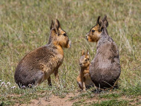 Galería Wildlife Eastern Patagonia 565x424