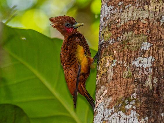 Galería Birding Colombia Andes to Orinoco 565x424