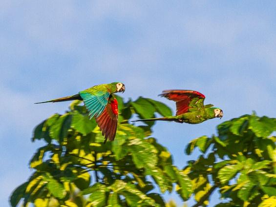 Galería Birds & Wildlife Southern Peru 565x424