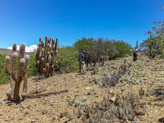 Galería Cacti of Bolivia 565x424