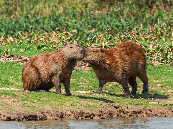 Galería Wildlife of NE Argentina 565x424