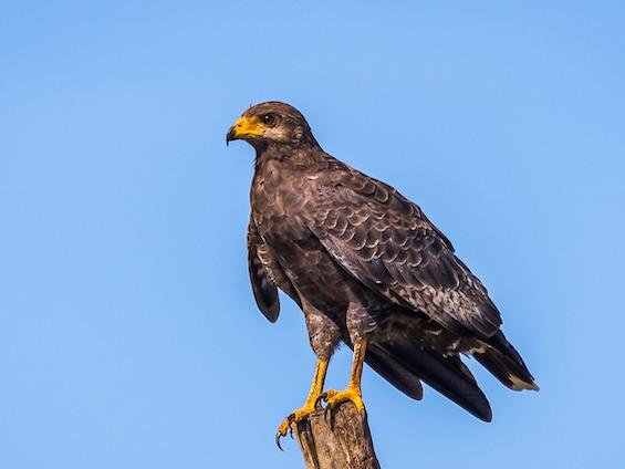 Galería Birds and WL Northern Peru 565x424