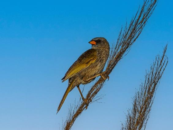 Galería Birding Southern Pampas 565x424