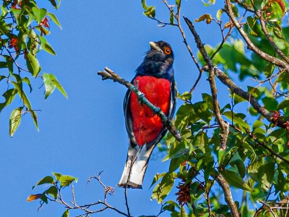 Galería Iguazú National Park 565x424