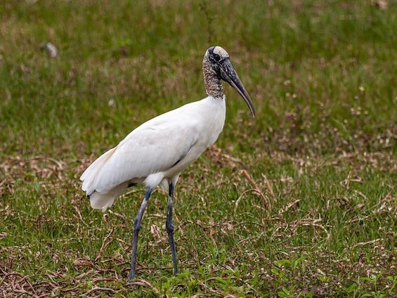 Galería Birding Northern Pampas 565x424